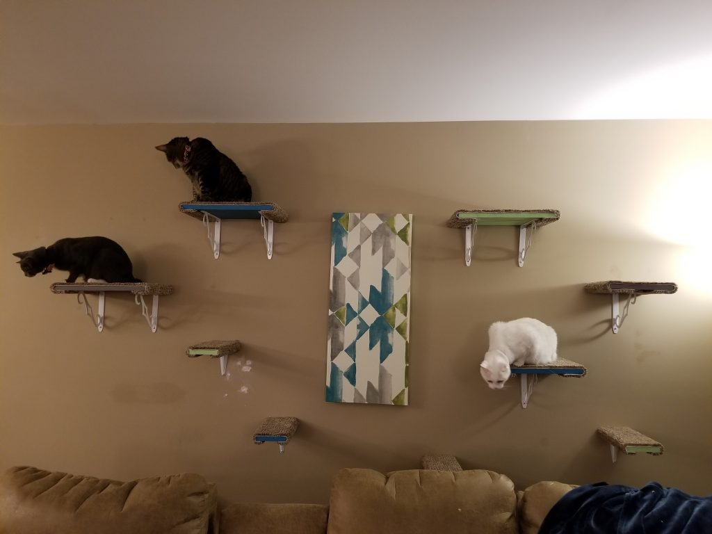 DYI cat shelves