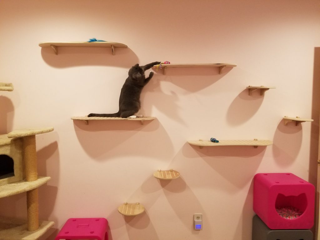 Tails Tips Best Cat Shelves Contempocat Wall Steps